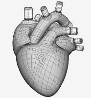 Учёные изобрели цифровое сердце